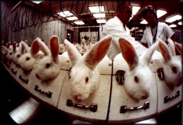 испытания косметики на животных